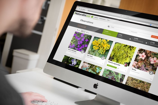 Au Luxembourg, iNaturalist rencontre un grand succès, et une plateforme nationale a été lancée en collaboration avec le MNHN. (Montage: Maison Moderne)