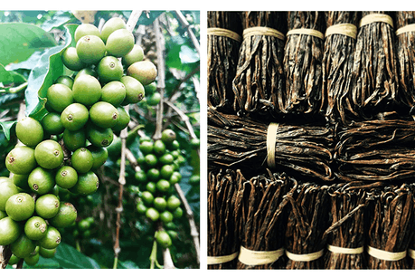 Monaco Resources is developing sustainable agriculture in Madagascar and Indonesia. (Crédit: Monaco Resources)