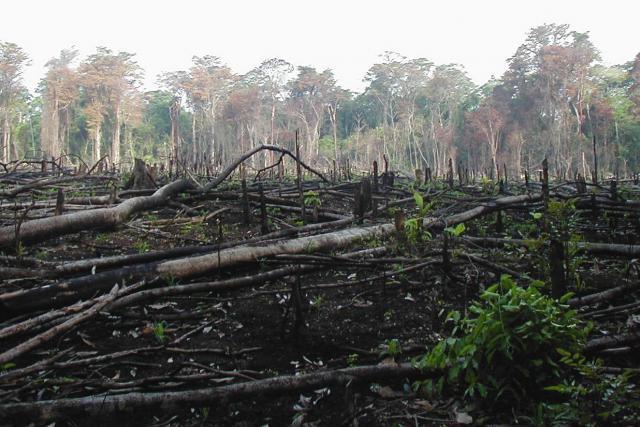 La surexploitation des forêts par l'Homme a contribué au réchauffement climatique. Il faut désormais réparer. (Photo: Licence C. C.)