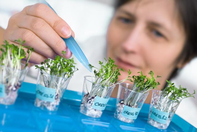 L'alimentation de demain pourrait se composer d'insectes, de substituts de repas et autres révolutions gustatives. (Photo: AdobeStock / tilialucida)