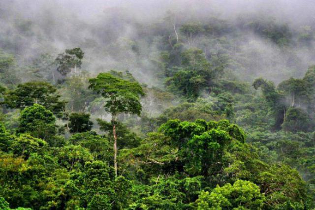 Le fonds luxembourgeois se proposait d'investir dans des projets de plantation de forêts éthiques. (Photo: aquaverde.org)