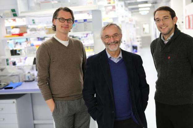 Jens Schwamborn (responsable du groupe Developmental and Cellular Biology au LCSB), Rudi Balling (directeur du LCSB et coordinateur de SysMedPD ) et Ronan Fleming (responsable du groupe Systems Biochemistry au LCSB) (Photo: © scienceRELATIONS / Université du Luxembourg°