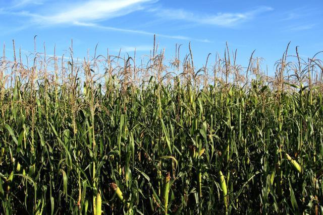 L'affaire portée devant les juridictions concerne le remboursement de subventions agricoles entre 2005 et 2012. (Photo: agriavis.com)