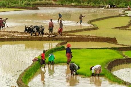 Le Fonds d'investissement pour l'entrepreneuriat agricole vise à fournir aux agriculteurs dans les milieux ruraux défavorisés les financements dont ils auront besoin. (Photo: Shutterstock)
