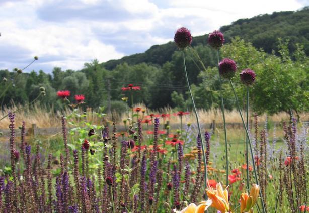"Fiona Hampton: ""Garden designers give you ideas you hadn't thought of""  Fiona Hampton"