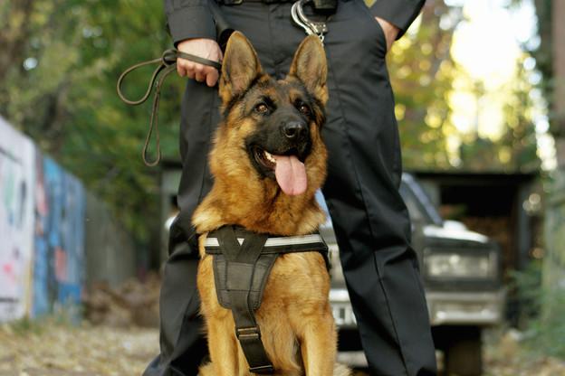 À la Gare et à Bonnevoie, chaque patrouille sera composée de deux agents et d'un chien. (Photo: Shutterstock)
