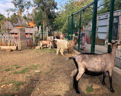 Les visiteurs peuvent nourrir les chèvres. Le nombre de sachets de graines disponible à l'accueil est rationné, pour leur éviter d'avoir des doses trop importantes. Interdit de leur donner autre chose. ((Photo: Paperjam.lu))