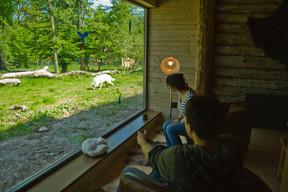 Sur la terrasse, seule une vitre sépare votre chambre des loups. ((Photo: MorganeBricard))