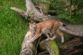 On retrouve 1.500 animaux à Sainte-Croix. ((Photo: Morgane Bricard))
