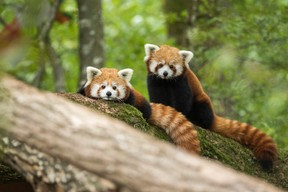 On retrouve plus d'une centaine d'espèces au parc animalier. ((Photo: Morgane Bricard))