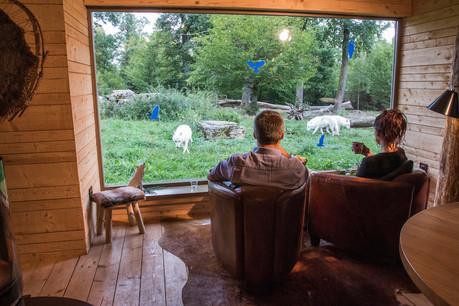 Mieux que la télévision, la vie des loups en direct. (Photo: MorganeBricard)
