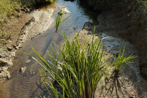 Le cours d'eau sera laissé ouvert, et les abords seront traités de manière naturelle. ((Photo: Matic Zorman/Maison Moderne))