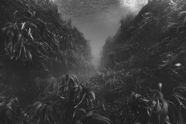 L'œuvre «Paysages productifs, Ouessant, laminaires, -10m, île d'Ouessant, 2016», deNicolasFloc'h est présentée au Cercle Cité. (Photo:NicolasFloch)