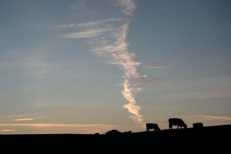Biodiversité, pollution, gaz à effet de serre: la politique agricole nationale a un lourd effet sur l'environnement. Suite à l'accord sur la nouvelle PAC, le plan national pour l'agriculture devrait apporter des réponses. Mais inverser la tendance semble difficile. (Photo: Shutterstock)