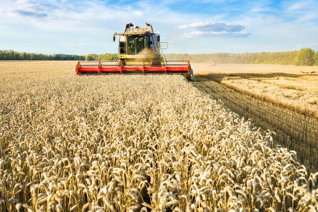 Le plan climat vise des objectifs ambitieux, y compris en matière d'agriculture. (Photo : Shutterstock)