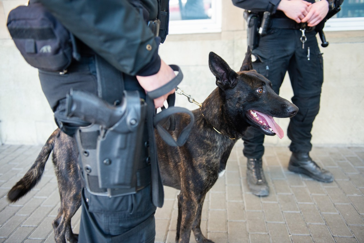 Archive photo of a canine unit at the central train station LaLa La Photo