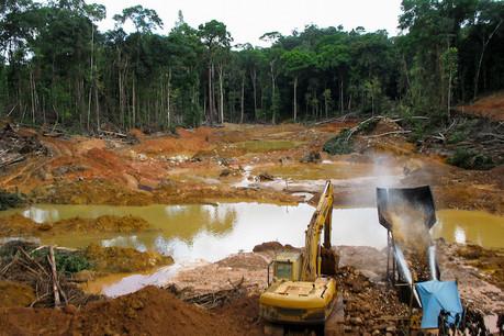 La dégradation de l'environnement est un des facteurs favorisant l'émergence de nouvelles maladies, a rappelé mercredi 19 août le président de la Chambre des députés, Fernand Etgen. (Photo: Shutterstock)