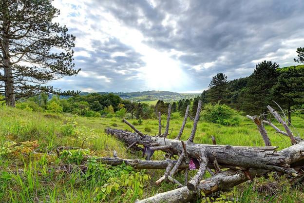 La colline de l'Aarnescht est une réserve naturelle où poussent de nombreuses orchidées sauvages. (Photo: Uli Fielitz)