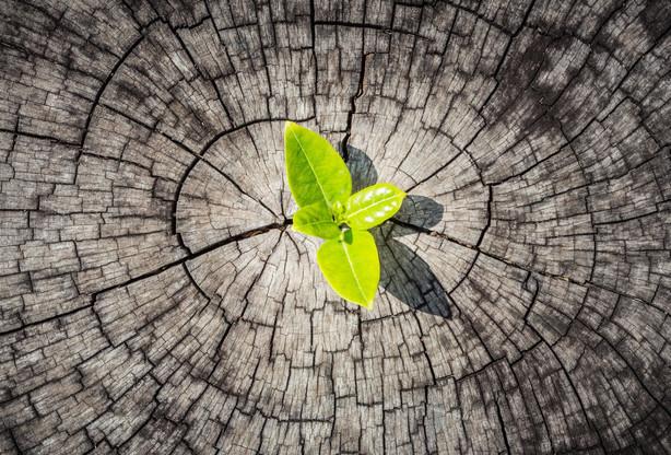 Le programme stratégie de relance Fit 4 Resilience a été prolongé d'une année supplémentaire pour permettre aux entreprises de mieux se réinventer. (Photo: Shutterstock)