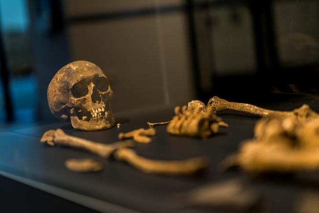 Qui n'a jamais rêvé de devenir archéologue et d'entrer dans les costumes d'Indiana Jones ou de Lara Croft? Pour avoir une idée de ce métier et des découvertes qu'il permet de faire, rendez-vous est donné au Musée archéologique d'Arlon chez nos voisins belges. (Photo: Facebook/Musée archéologique d'Arlon)