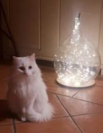 L a chatte blanche de la maison s'appelle  Arwen , du nom d'un des célèbres personnages de la saga. Le chat gris et blanc se nomme, lui, Gandalf. ((Photo: La Terre du Milieu))
