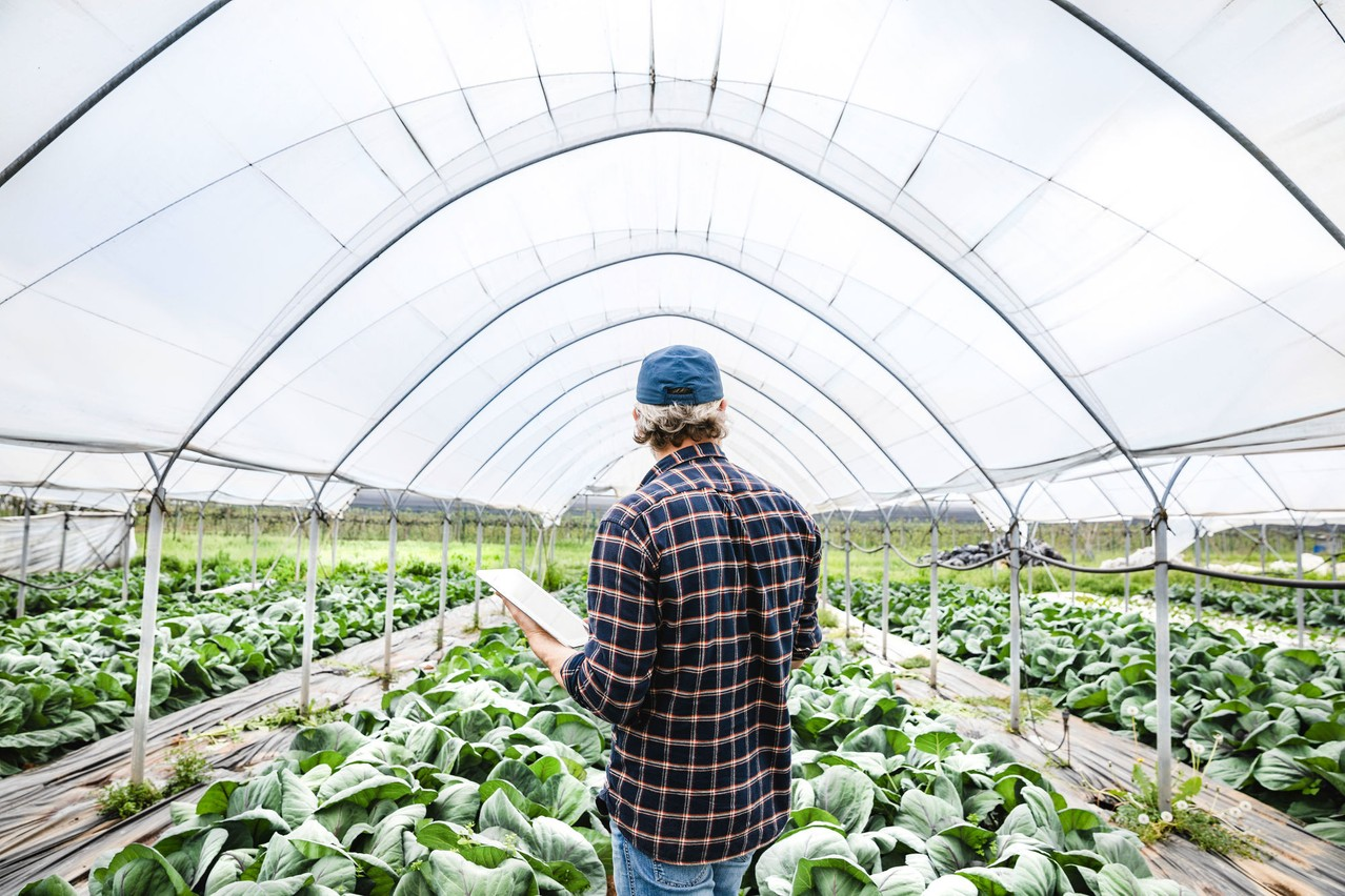 Farmer checking his crop in a greenhouse, using a tablet computer Crédit photo : UBS