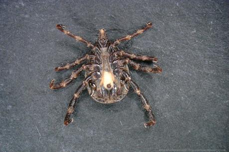 Le spécimen retrouvé à Dudelange a été le seul confié à ce jour au Musée national d'histoire naturelle. (Photo: Musée national d'histoire naturelle de Luxembourg)