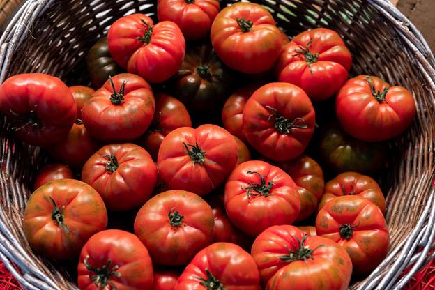 La tomate, un enjeu global discuté lors du prochain événement Hungry Planet aux Rotondes. Photo by Iñigo De la Maza on Unsplash