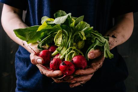 Les légumes sont plus que jamais un élément moteur de la gastronomie internationale, et la cuisine végétale a son «guide vert» avec We're Smart. (Photo: Shutterstock)