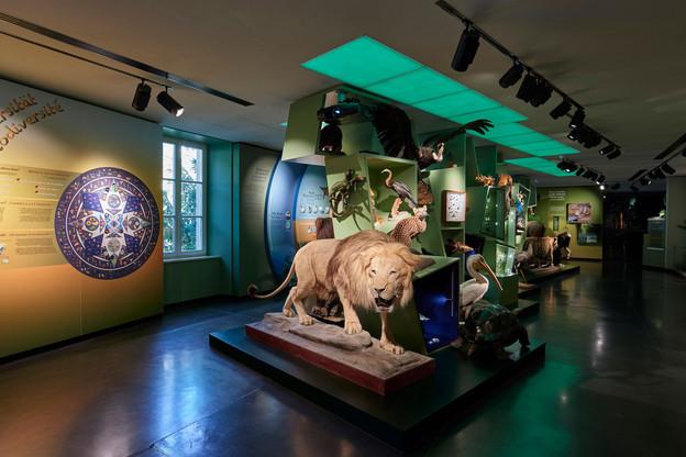 À l'occasion des Luxembourg Museum Days, tous les musées ouvrent leurs portes, dont le NaturMusée. (Photo: Eric Chenal)