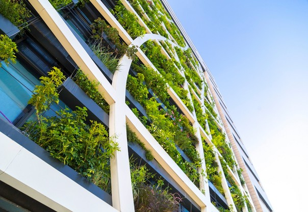 Detail from a living wall covered with a variety of plants, flowers and grass, eco-friendly urban architecture in Tel Aviv, Israel. (Crédit: iStock - 1165312163)