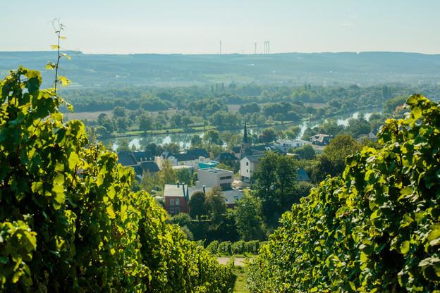 Les viticulteurs indépendants de la Moselle luxembourgeoise ont trouvé leur plateforme de vente commune en ligne avec waistrooss.lu. (Photo: Matic Zorman)