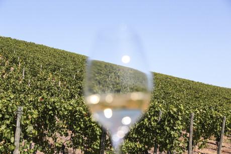Cette année, pour découvrir les secrets des vins et crémants luxembourgeois à l'arrivée de l'hiver, il faudra oublier la capitale et se diriger vers la Moselle luxembourgeoise, directement auprès des producteurs, lors de deux week-ends exceptionnels. (Photo: Romain Gamba / Maison Moderne)