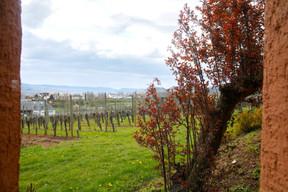 Les vignes du Domaine Mathis Bastian surplombent la vallée, au pied de la maison viticole, à Remich. (Matic Zorman/Maison Moderne)