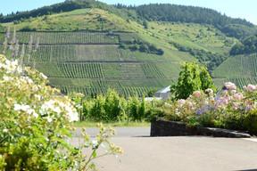 Le domaine et ses nombreuses vignes. ((Photo: WeinKulturgut))