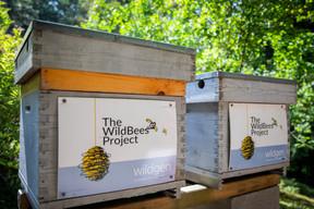 Wildgen s'est lancé dans sa propre production de miel ((Photo: Patricia Pitsch - Maison Moderne Publishing SA))