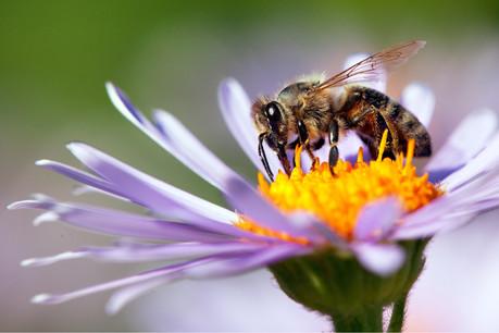 Parmi les projets soutenus par The Yield Lab, ApisProtect veille sur la santé de dix millions d'abeilles dans le monde. (Photo: Shutterstock)